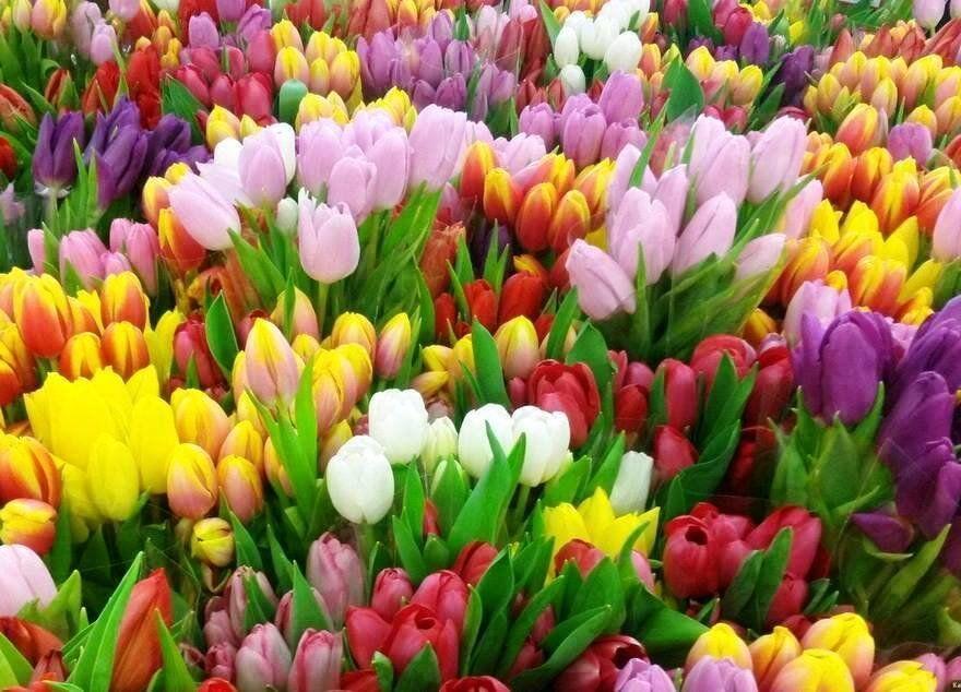 Цветы киев купить тюльпаны